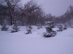 23雪に埋もれた芝生サイト