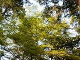 23大元公園の新緑