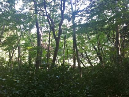 自然教育園13