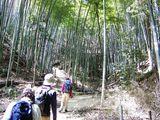 12竹林の中を行く