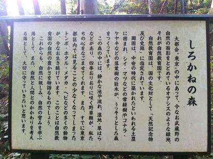 自然教育園07