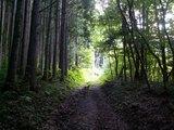 06人工林と天然林
