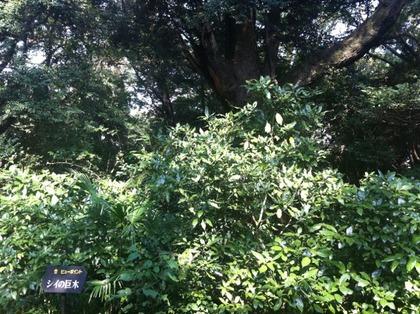 自然教育園05