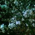 20050408_1932_001.jpg