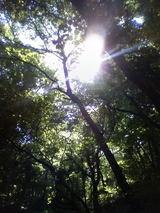 19林間1