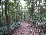 25林間コース2