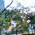 20050410_1830_000.jpg