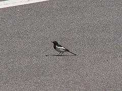 地面に降りた小鳥