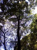 20林間2