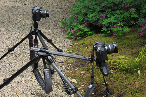 manfrotto20110529-1