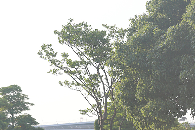 5D320729