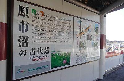埼玉新都市交通伊奈線75