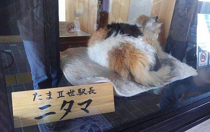わかやま電鉄貴志川線97