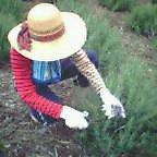 農家の子です。