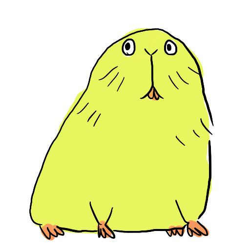 モルモットちゃん
