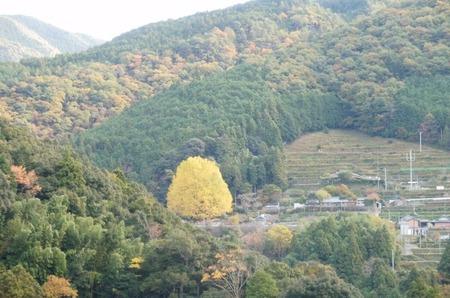 福定宝泉寺の大銀杏