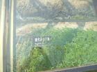 20111030痩西湖8唐代城跡