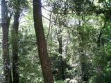 20090422有栖川公園3