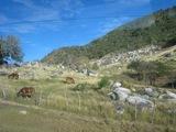 20009キューバ 牧場
