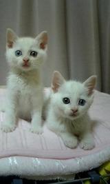 20100718猫