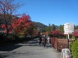2008年秋京都 113