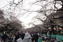 20160329上野1