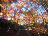 2008年秋京都 167