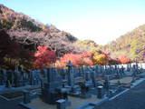 2008年秋京都 194