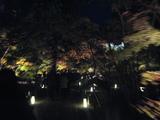 2008年秋京都 098