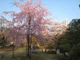 20080408後楽園4