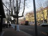 20101204梧桐
