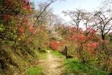 20100419吾妻山公園