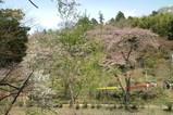 20100419吾妻山公園入り口