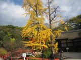 2008年秋京都 071