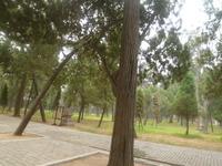 20110618孔子廟3