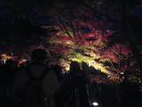 2008年秋京都 095