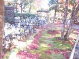 2008年秋京都 190