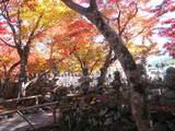 2008年秋京都 198