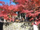 2008年秋京都 116