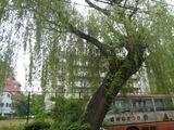 20100523-2遊郭見返り柳