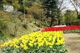 20100419吾妻山公園チューリップ
