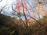 20091120御嶽目薬の木