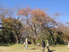 20151128柿の木