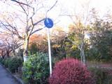 2008年秋京都 091