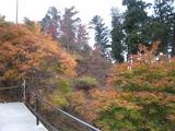 20091120御嶽神社