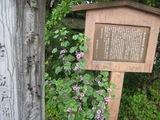 20100523-7松戸宿