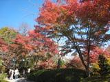 2008年秋京都 135