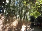 2008年秋京都 136