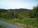 20091023収穫祭みかん畑