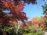 2008年秋京都 133